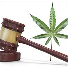 Marijuana business tax questions